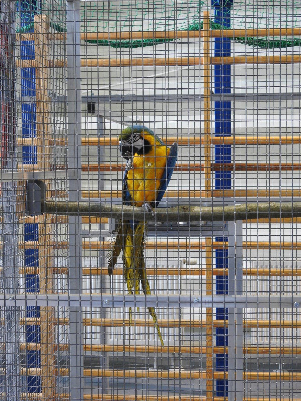 Pokaz ptaków egzotycznych na ˝102˝!